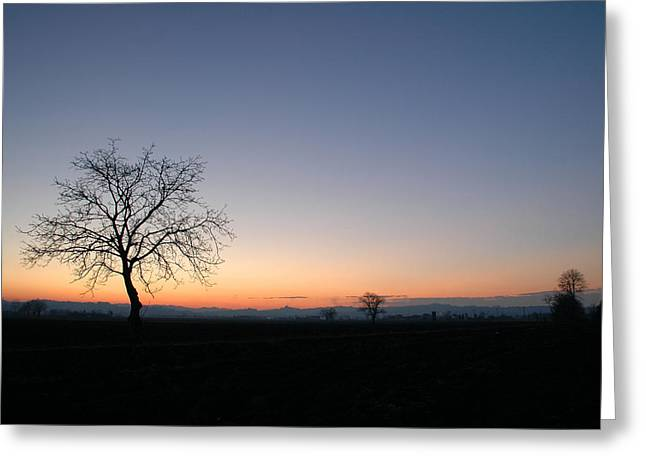 Lonely Tree Greeting Card by Guido Strambio
