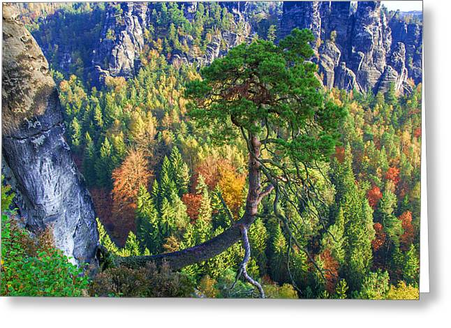 Lonely Tree In The Elbe Sandstone Mountains Greeting Card