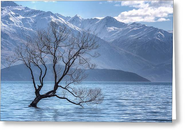 Lonely Tree Greeting Card by Kim Andelkovic
