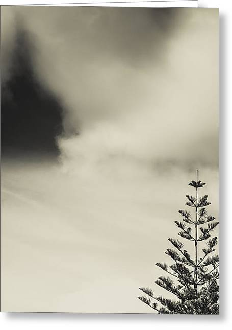 Lonely Tree Greeting Card by Marco Oliveira