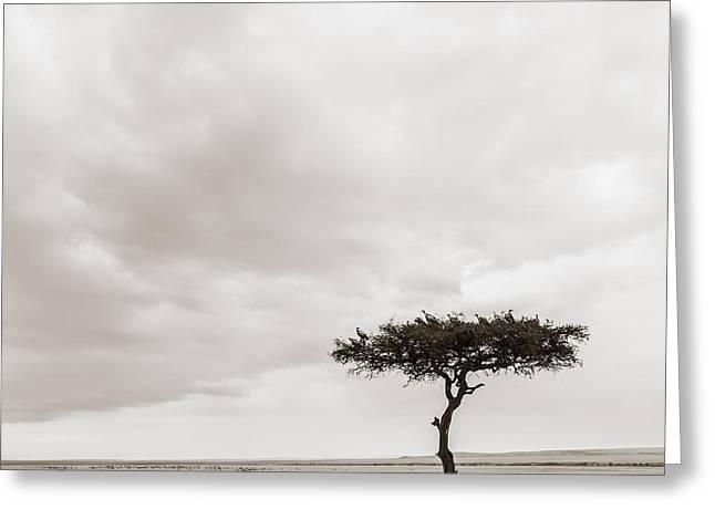 Lonely Tree Masai Mara Kenya Greeting Card by Regina Mueller
