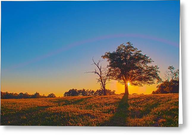 Greeting Card featuring the photograph Lonely Tree On Farmland At Sunset by Alex Grichenko