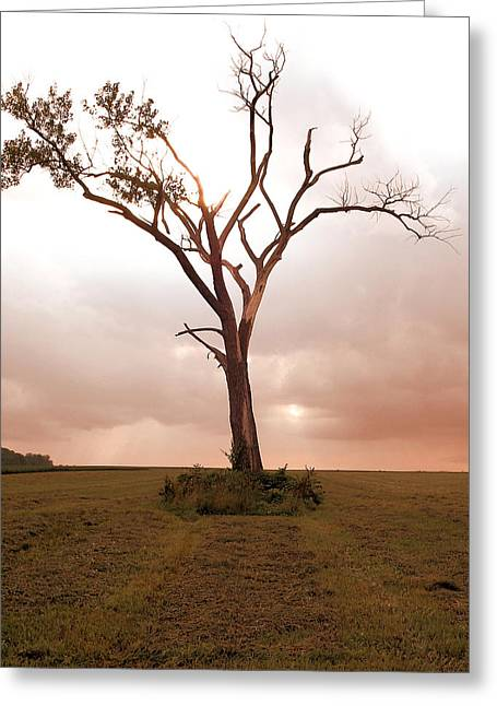 Greeting Card featuring the photograph Lonely Tree by Ricky L Jones