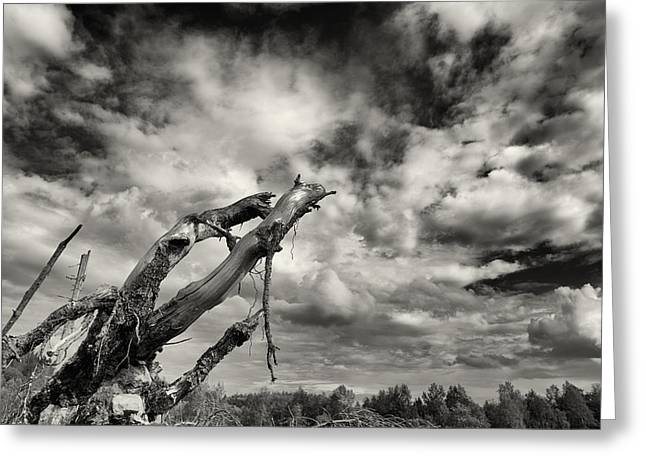 Lonely Tree Roots Reaching For The Sky Greeting Card