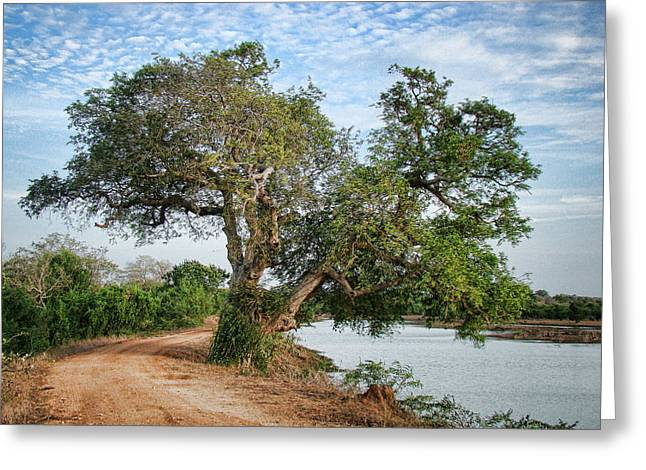 Lonely Tree Greeting Card by Sanjeewa Marasinghe