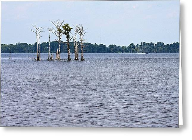 Lonely Trees Greeting Card by Carolyn Ricks
