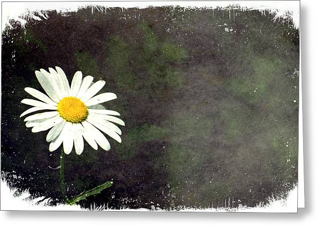 Lonesome Daisy Greeting Card