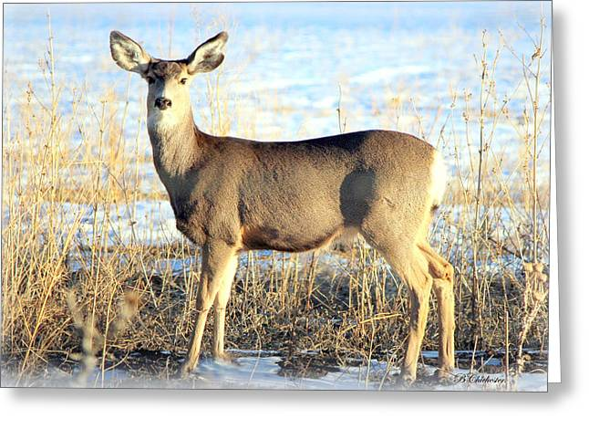 Lonesome Doe Sunset Greeting Card by Barbara Chichester