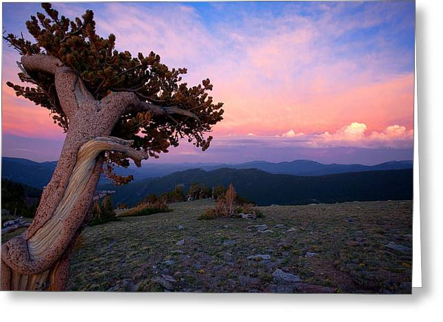 Lonesome Pine Greeting Card