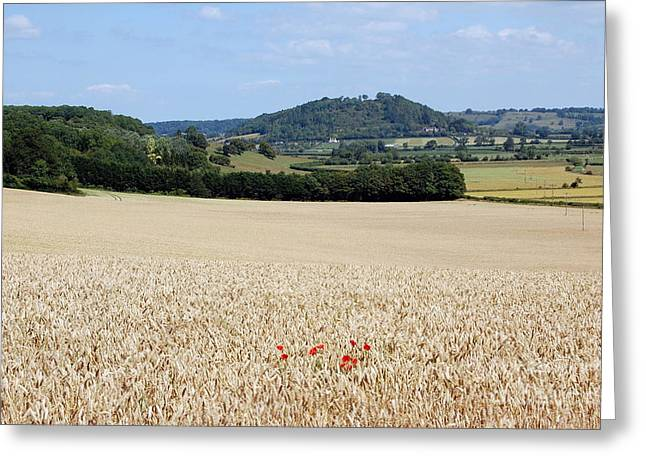 Lonesome Poppies Greeting Card