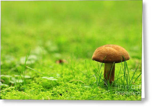Lonesome Wild Mushroom On A Lush Green Meadow Greeting Card