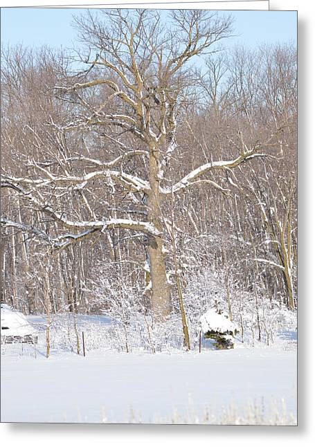 Greeting Card featuring the photograph Loney Ash by Dacia Doroff