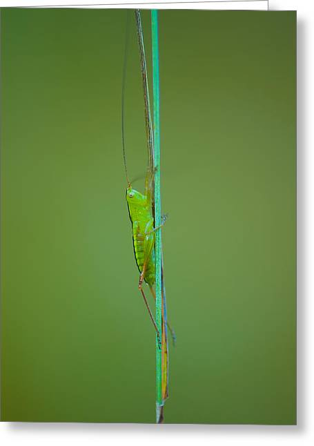 Long And Lean Greeting Card by Sarah Crites