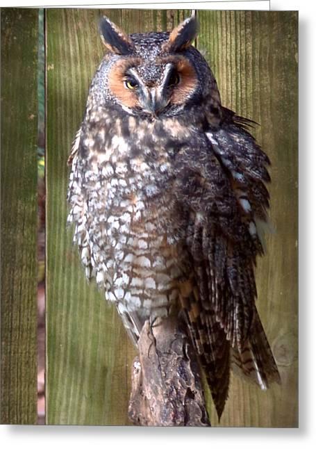 Greeting Card featuring the photograph Long Eared Owl by Joseph Skompski