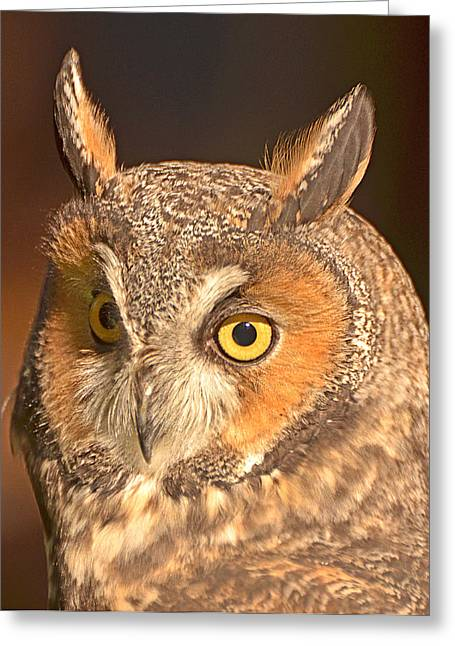 Long-eared Owl Greeting Card by Nancy Landry