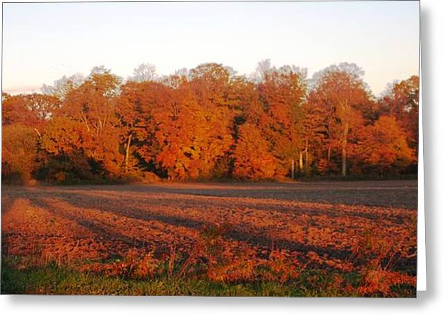 Long Fall Shadows Greeting Card