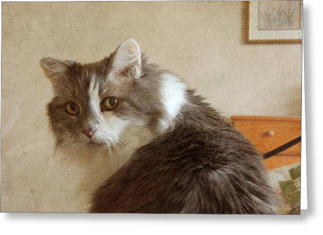 Long-haired Cat Portrait Greeting Card