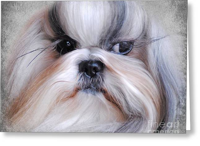 Long Haired Shih Tzu Greeting Card
