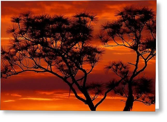 Long Leaf Pine Greeting Card
