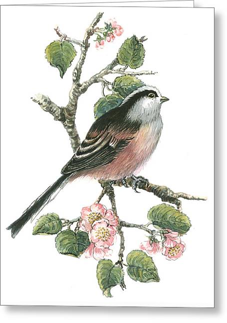 Long Tailed Tit And Cherry Blossom Greeting Card by Nell Hill