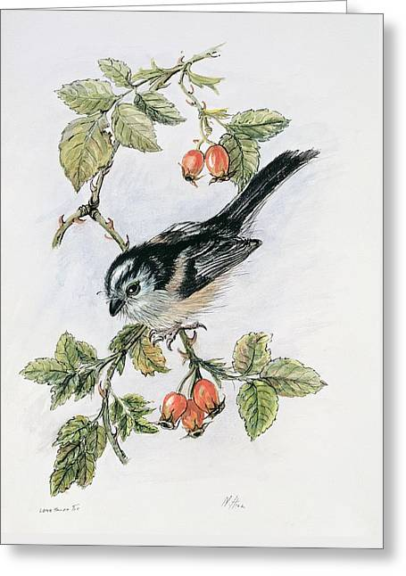 Long Tailed Tit And Rosehips Greeting Card by Nell Hill