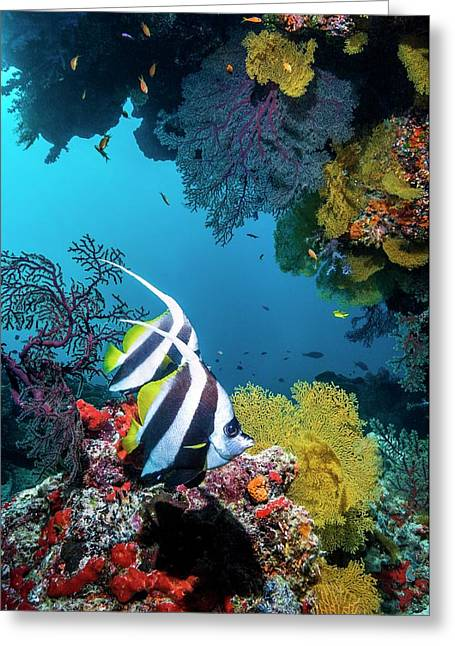 Longfin Bannerfish Greeting Card