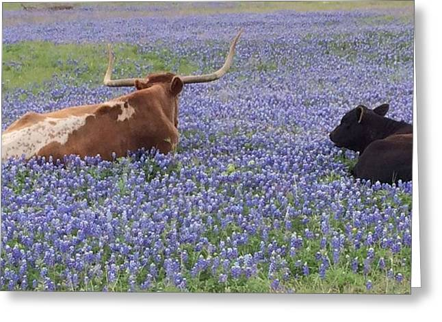 Longhorn And Friend Greeting Card by Colleen Dyer