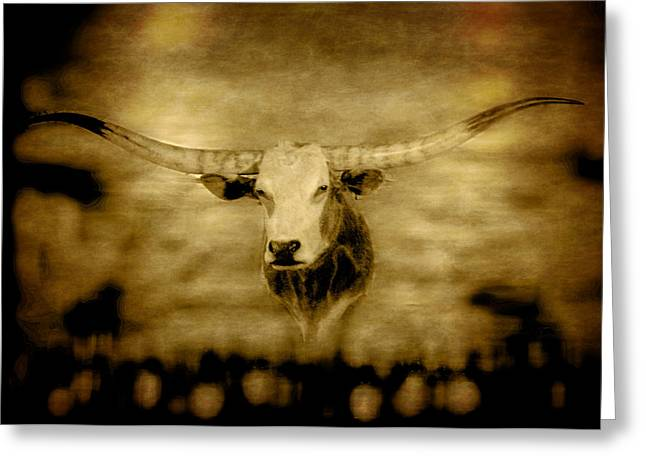 Longhorn Bull Greeting Card