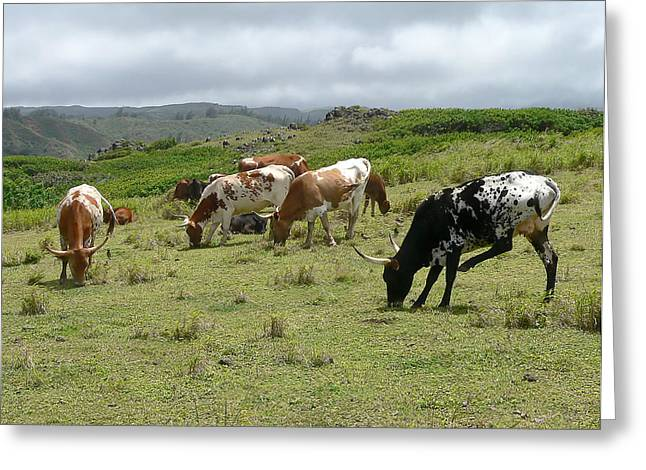 Longhorn Cattle Greeting Card