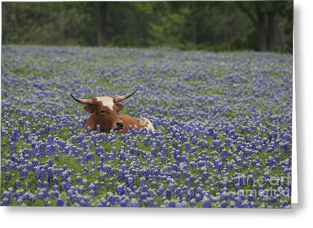 True Texan Greeting Card