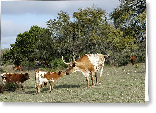 Longhorn Love Greeting Card by Bill Morgenstern