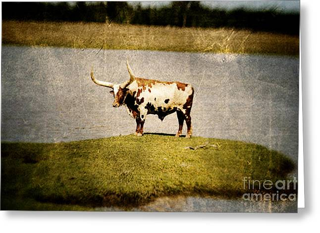 Longhorn Greeting Card by Scott Pellegrin