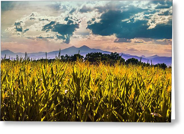 Longs Peak Harvest Greeting Card by Rebecca Adams