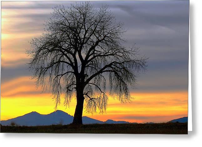 Longs Peak Sunset Greeting Card by Rebecca Adams