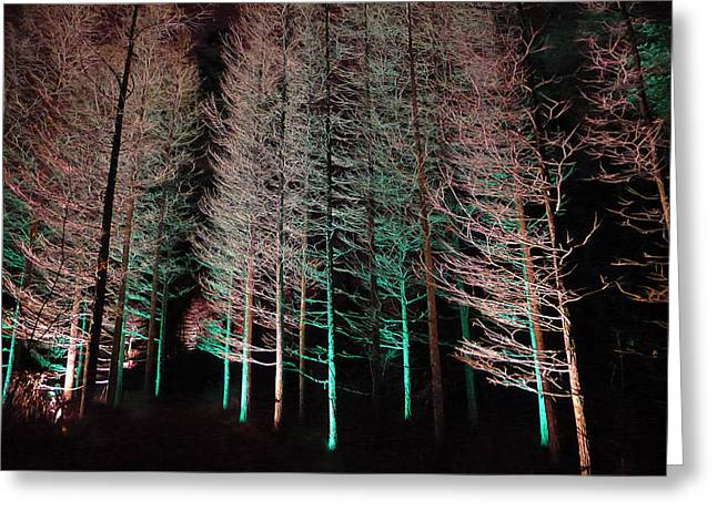Greeting Card featuring the photograph Longwood Gardens - Tree Stand At Night by Richard Reeve
