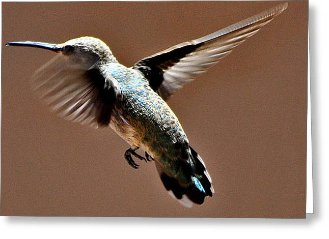 Greeting Card featuring the photograph Look At My Crazy Crows Feet by Jay Milo