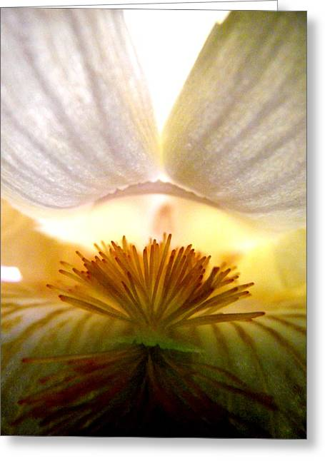 Look Inside The Iris Greeting Card by Virginia Forbes