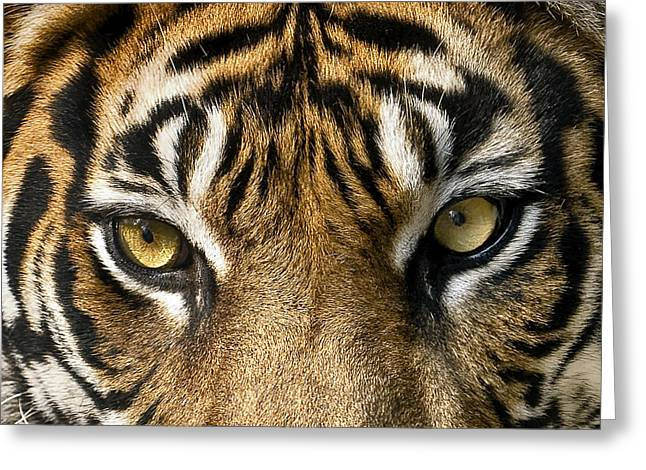 Look Into My Eyes Greeting Card by Gary Neiss