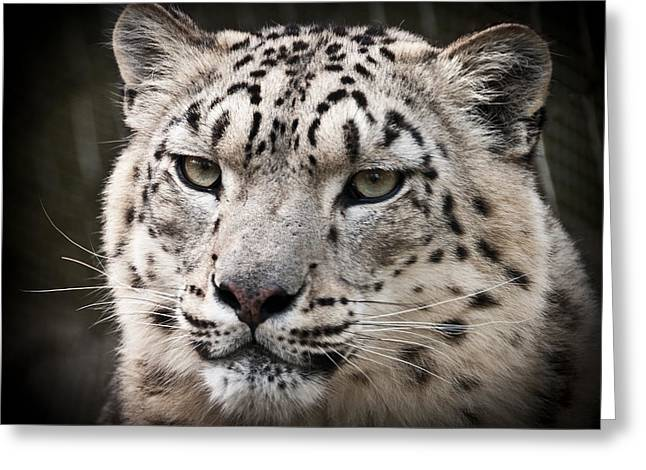Look Into My Leopard Eyes Greeting Card by Chris Boulton