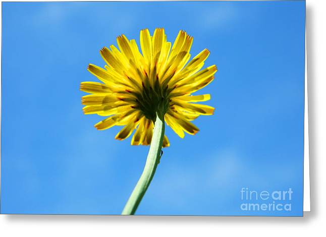 Look Up To The Sky Greeting Card by Andrea Anderegg