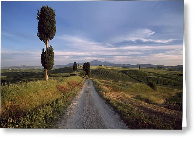 Looking Down Track Lined With Cypress Greeting Card