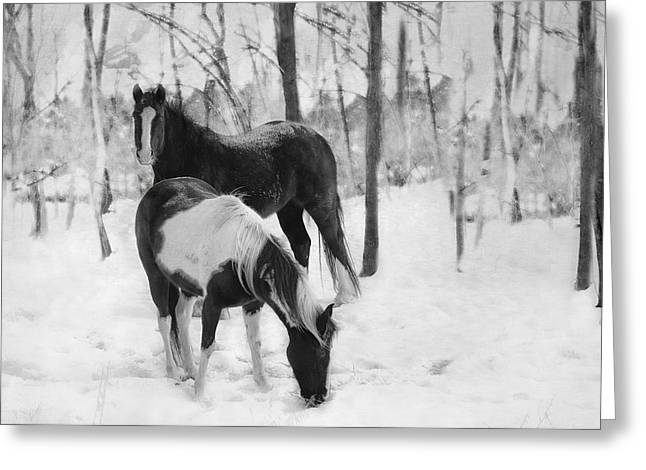 Looking For A Bite Greeting Card by Kathy Jennings