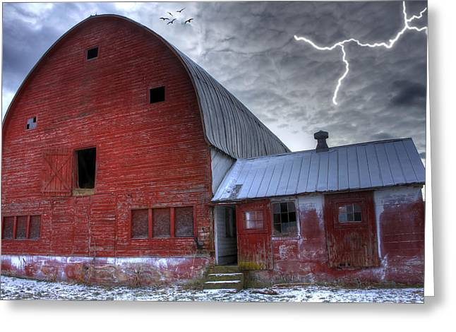 Looking For Shelter Greeting Card by David Simons