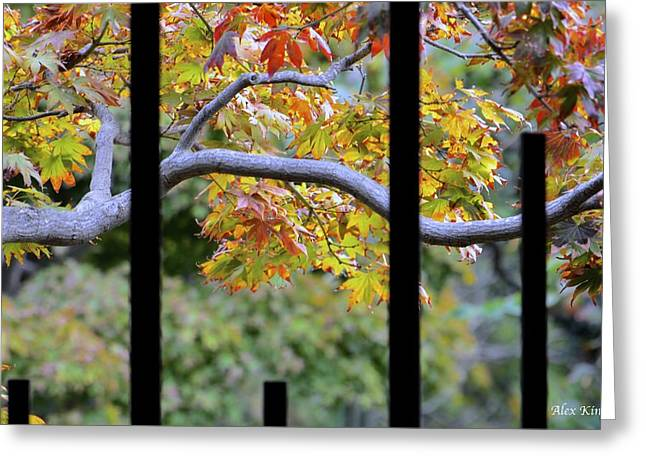 Looking In The Japanese Garden Greeting Card by Alex King