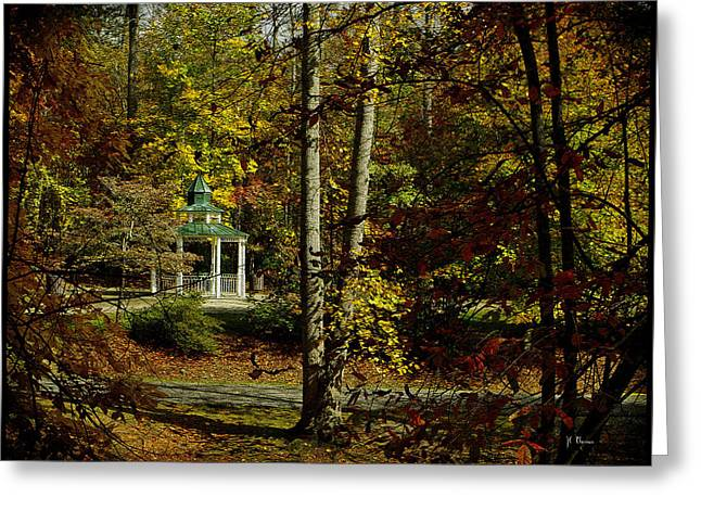 Greeting Card featuring the photograph Looking Into Fall by James C Thomas