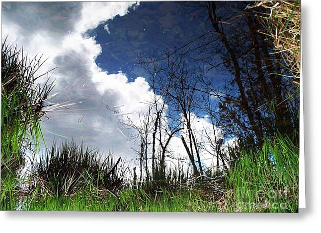 Greeting Card featuring the photograph Looking Into The Bog by Joy Nichols