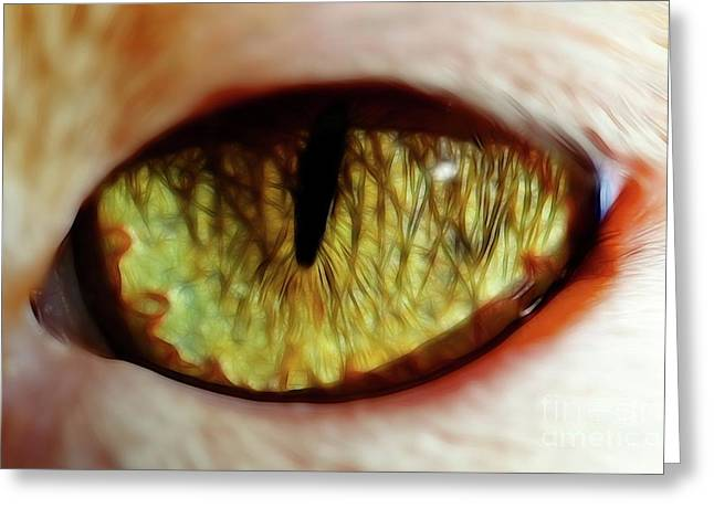 Looking Into The Soul Greeting Card by Mariola Bitner