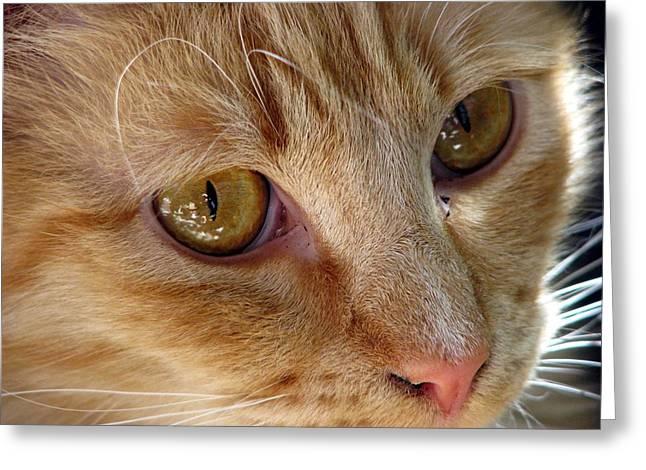Looking Love In The Eye Greeting Card