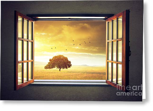 Looking Out The Window Greeting Card by Carlos Caetano