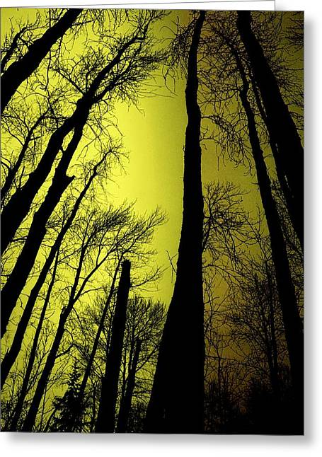 Looking Through The Naked Trees  Greeting Card by Jeff Swan